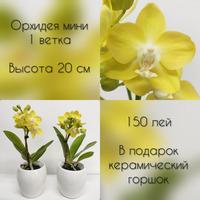 Новое поступление орхидеи макси и мини!!!