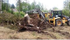 Бельцы Очистим запущенные участки территории от деревьев пней